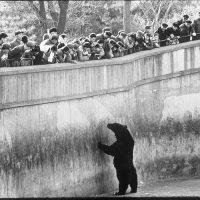 Russian bear at the Beijing Zoo, 1975.